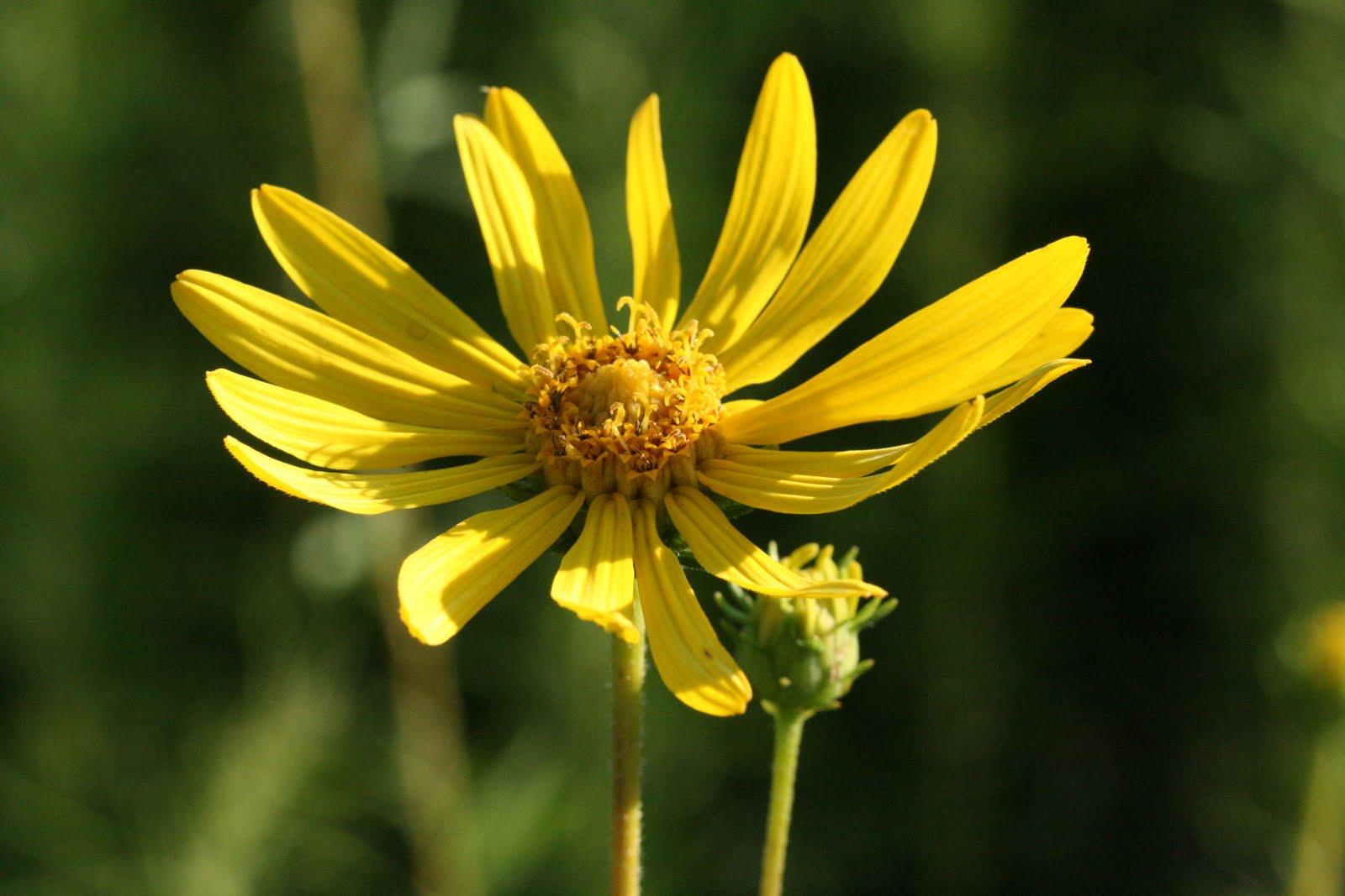 Central Florida Wildflowers | eHow.com