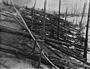 Le saviez-vous?L'explosion mystérieuse en Tunguska, 1908 Explosion-tunguska-arbre-so