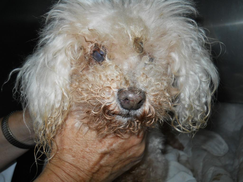 Blind/Deaf Shelter Dogs Networking Directory
