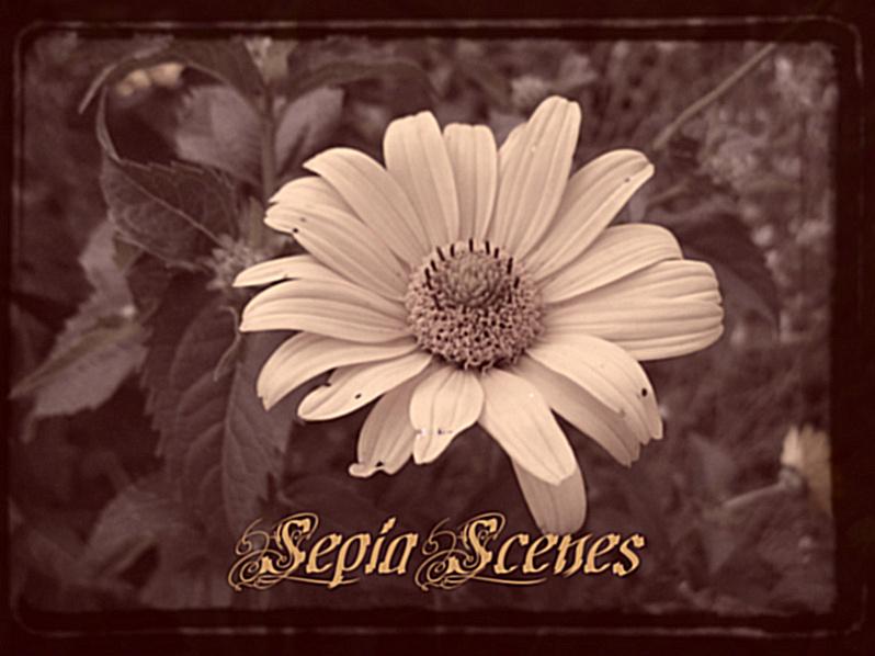 [sepiaflower.jpg]