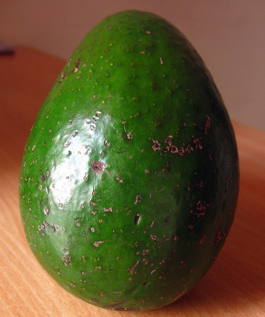 how to grow avocado in india