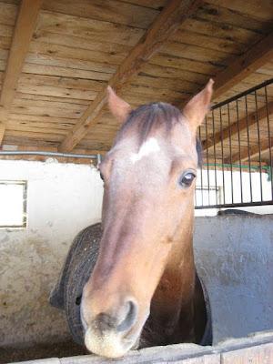 Konj na Salašu 137