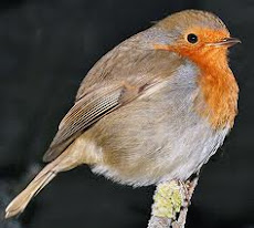 Robins are one of my favourite birds