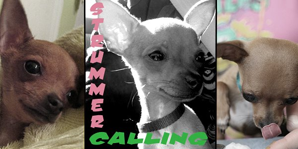 Strummer Calling; The Only Pup That Matters