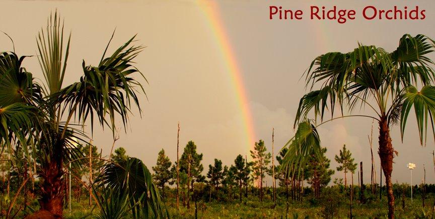 Pine Ridge Orchids blog