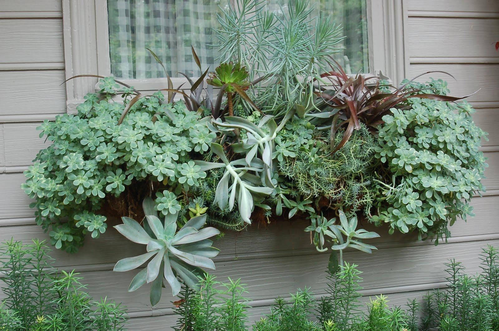 Bwisegardening day 91 a succulent sensation - Succulent container gardens debra lee baldwin ...