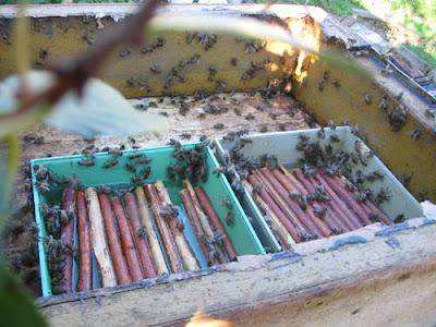 мёд, пчёлы, кормление пчёл, кормушка для пчёл, пчеловодство