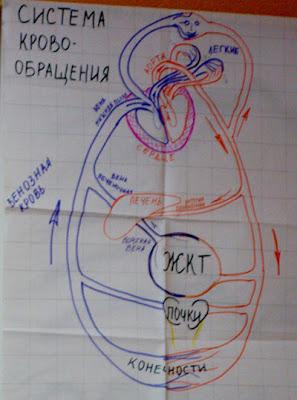 сердечные болезни, инфаркт инсульт, болезнь инсульт, ощелачивание крови