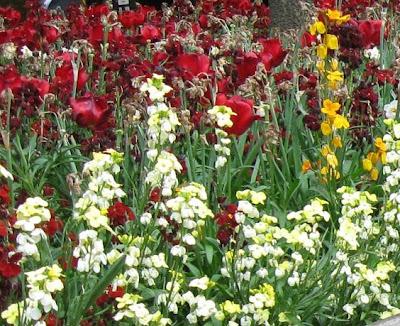 Проектирование дизайн цветника, цветочная клумба, клумбы, планировка цветника