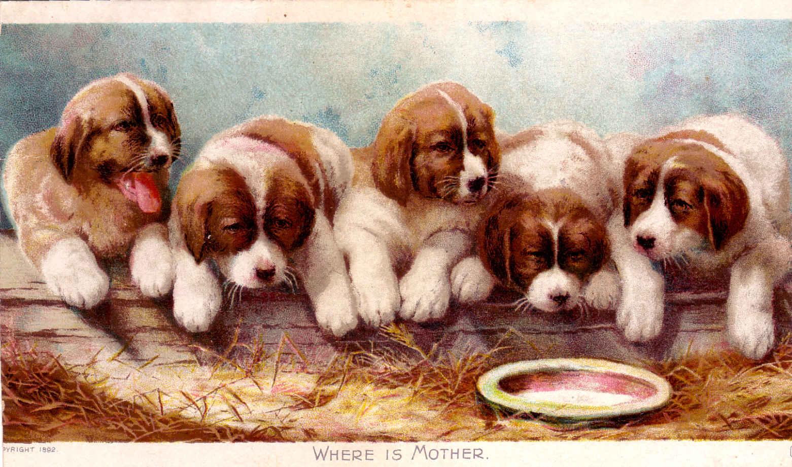 Старые открытки про животных