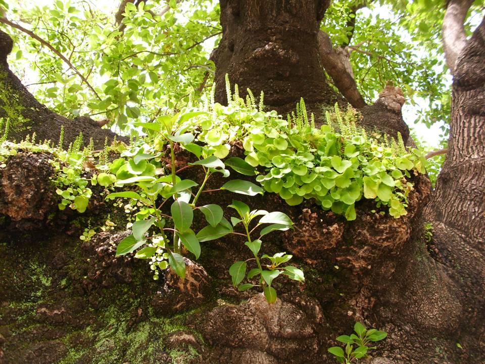 Naturaleza verde del legolas jardin de la cartuja sevilla for Jardines de la cartuja