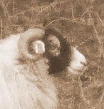 Here's lookin at ewe
