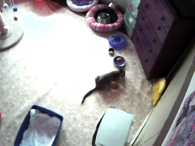 Pregnant cat + web cam = new meaning of kitten watch