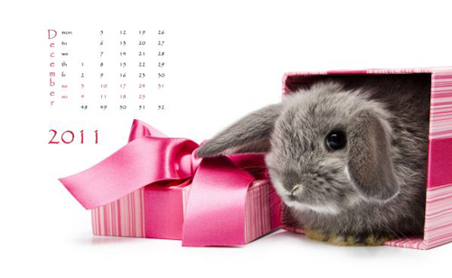 Picture of Happy Chinese New Year 2011 with Colorful Rabbit and Spring