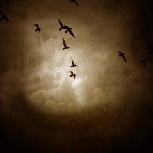 Hui como las aves de muchos cielos negros tratando de encontrar un poco de amor...