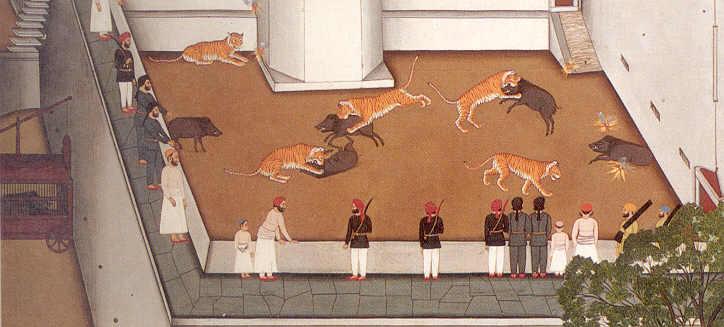 [Tiger_boar.jpg]