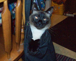 Cat Nearly Out of the Bag
