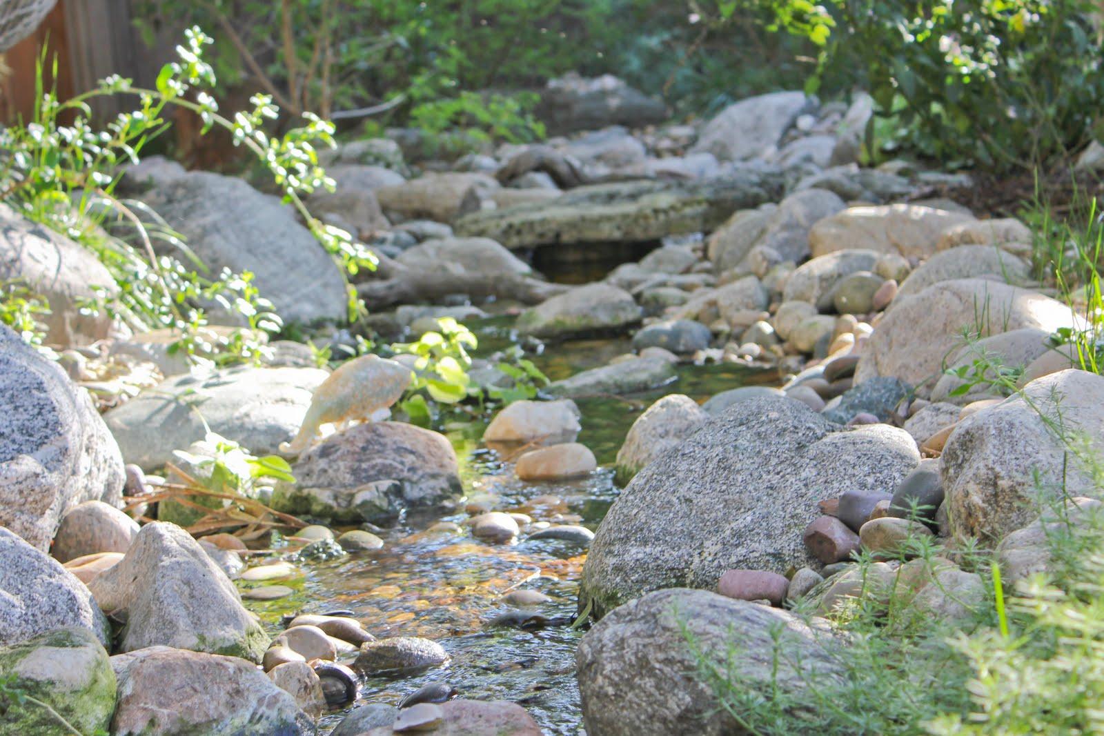 visit a mermaid u0027s garden the backyard stream laguna dirt