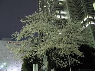Tokyo Metropolitan Government Building, Shinjuku.