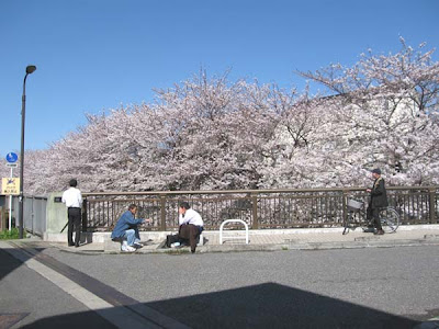 Neighbors in Nakano ward, Tokyo, under the cherry blossom