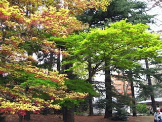 Spring foliage, Shinjuku Gyoen Park, Tokyo.