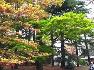 Spring foliage, Shinjuku Gyoen Park, Tokyo.
