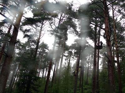 Go Ape, Haldon Forest Park