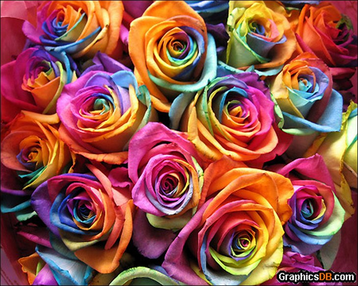 Natural rainbow roses all colors in one rose for How to color roses rainbow