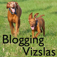 Other Vizslas Who Blog