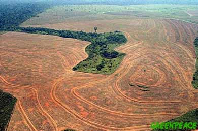 Amazonas en peligro