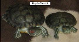 Червоновушки - Нептун (зліва) і Шустринька