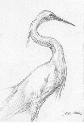 ACEO egret sketch