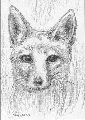 kit fox aceo sketch