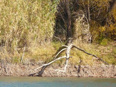 Un saludo al río