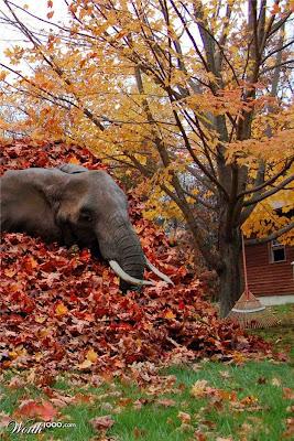 sorok gajah hide elephant good elephant sejarah gajah