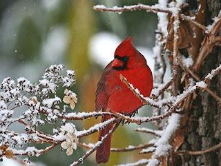 Cardinal_DavidParish.jpg