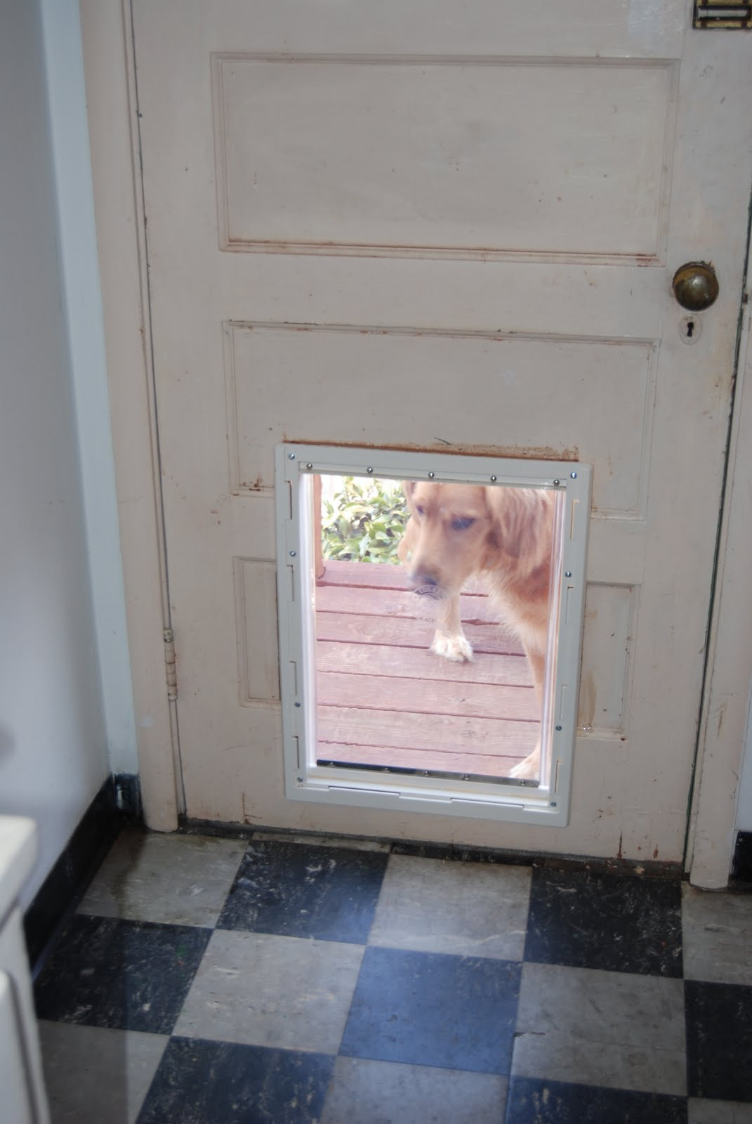 Homemade Dog Door Jump Home Dog Training