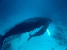 Humpback Whales 2010
