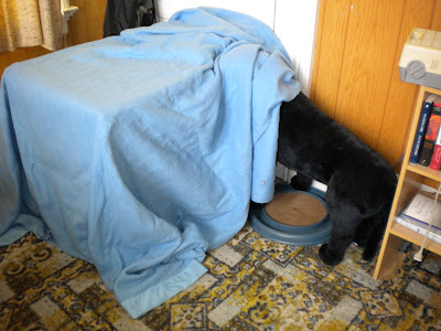 Big boxes covered by a blanket with a life sized stuffed Lab 'looking' under the blanket