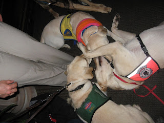3 yellow labs all lying together in a circle