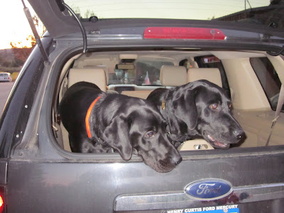 Dagan on the left, Ned on the right looking out the back of the car
