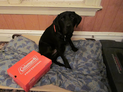 Dagan sitting on his dog bed with a shoe box