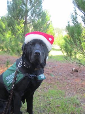 Dagan, in his Santa Hat at the Christmas tree farm
