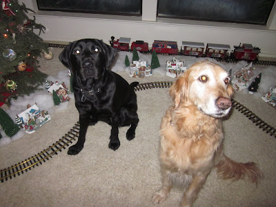 8 year old golden retriever Guide Dog Beamer and Dagan in front of the tree
