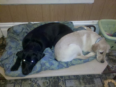 Dagan and Katra sharing his dog bed
