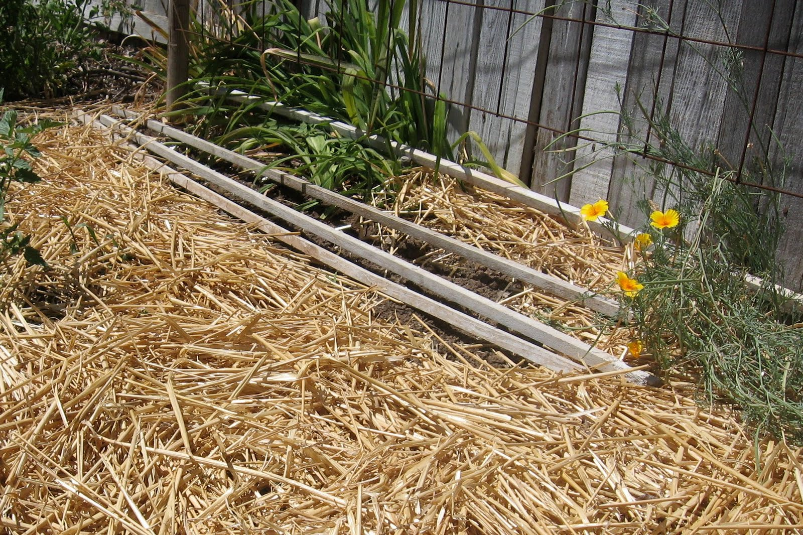 Mulching the Garden with Straw • Brown Thumb Mama