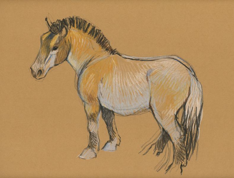 Cavallo disegno matita colorata for Cavallo disegno a matita