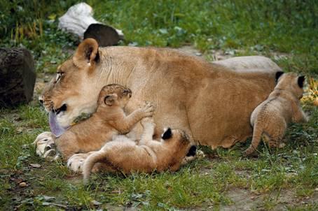 la reproduccion de los animales: