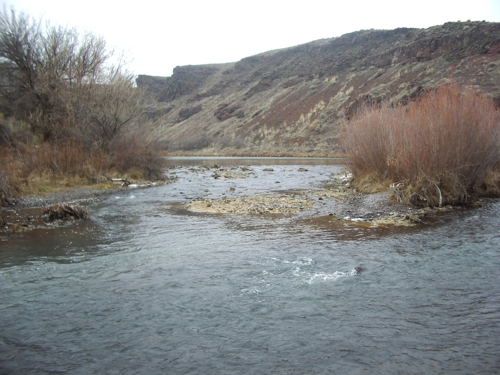 Come and find me owyhee river oregon january 27 2011 for Owyhee river fly fishing