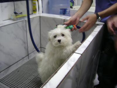 Hummmm que banho mais delicioso vou ficar cheirosinha
